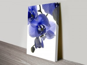 Blue Orchid 1 Floral Art Print