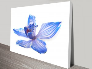 Blue Orchid 2 Flower Artwork on Canvas
