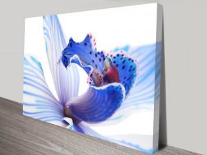 Blue Orchid 3 Flower Art Print