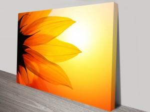 Flower of the Sun Canvas Art Print