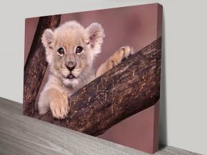 Lion Cub Animal Art