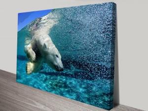 Polar_bear_diving-sm
