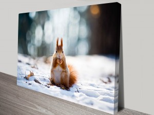 Red-Squirrel-s