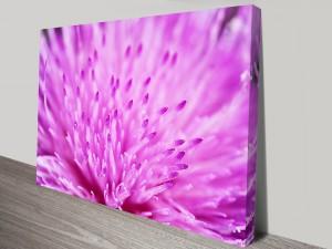 Macro Pink Floral Canvas Art Print