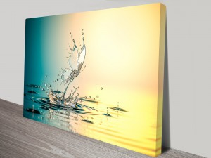 Butterfly Water Drops Canvas Prints Australia