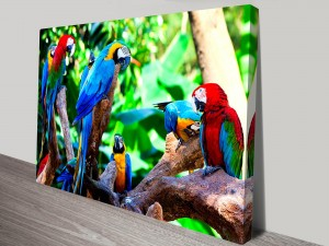 Colorful-Parrots-s