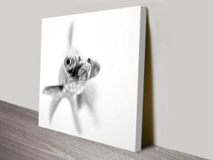 grumpy goldfish canvas wall art print