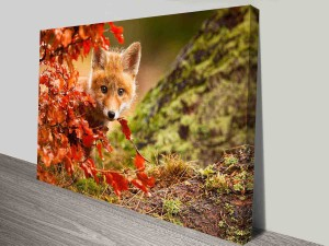 curious baby fox canvas wall art print