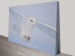 snowy owl canvas wall art print