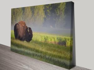 the great buffalo wall art canvas print