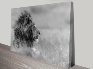 the great king lion wall art canvas print