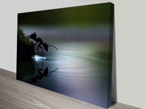 ant reflections canvas print wall art