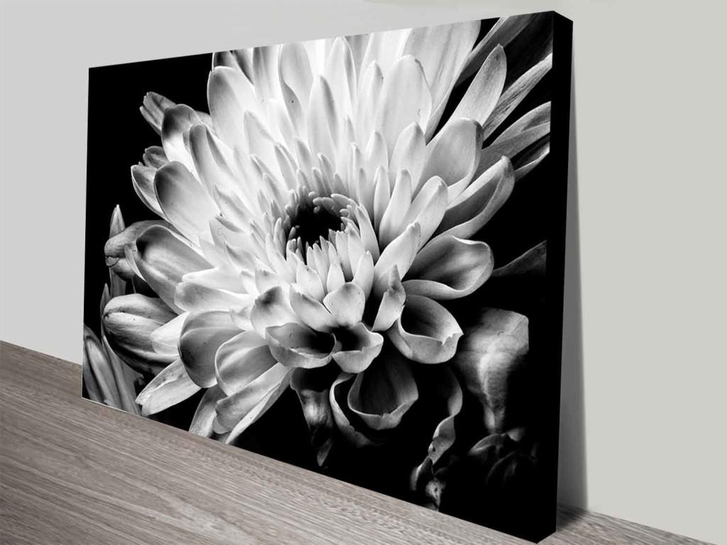 Black And White Floral Wall Decor : Monochrome chrysanthemum floral canvas prints wall art
