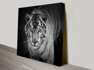 stare of the tiger canvas wall art print