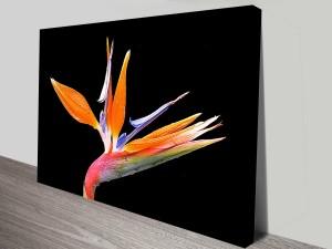 bird of paradise bloom wall art canvas print