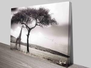 shaded giraffe canvas photo wall art print australia