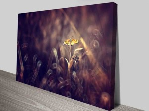 fall butterfly canvas print photo to canvas