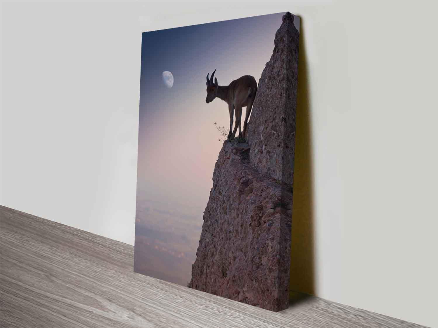Mountain goat discount photo art into canvas prints for sale for Cheap canvas prints for sale