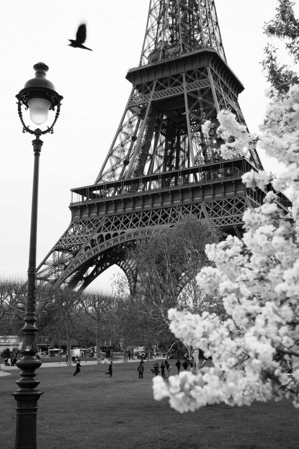 Eiffel Tower Framed Portrait Online