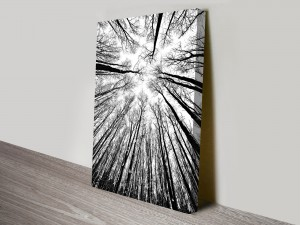 Forest Canopy Black and White Artwork on Canvas