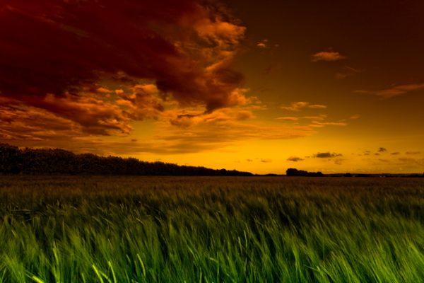 Green Fields of Kent Photo Canvas Art Print