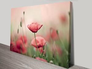 Poppy Haze Floral Canvas Print Australia