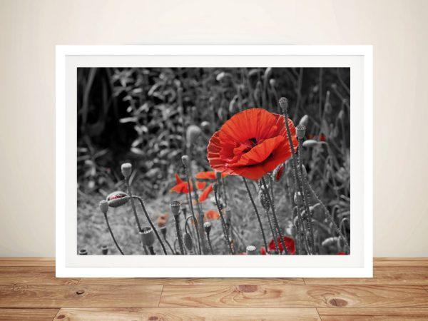 Poppy colour splash Framed Wall Art