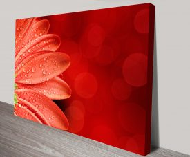 Red Petals Macro Floral Art Print on Canvas