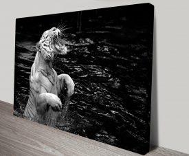 Roaring White Tiger Black and White Canvas Art