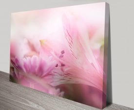 Soft Blossoms Floral Wall Art Print on Canvas