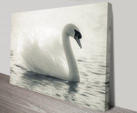 Swan Lake Black and White Canvas Wall Art