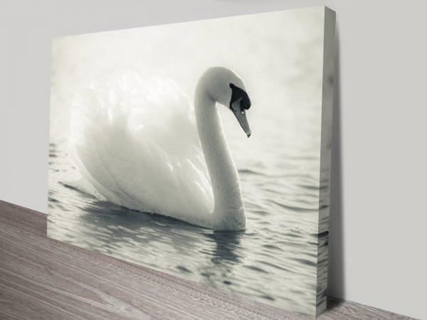 Swan Lake Black and White Canvas Wall Art