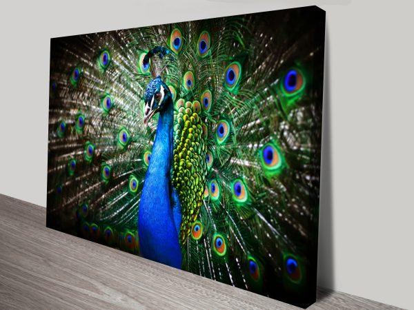 Amazing Peacock Sydney Canvas Prints