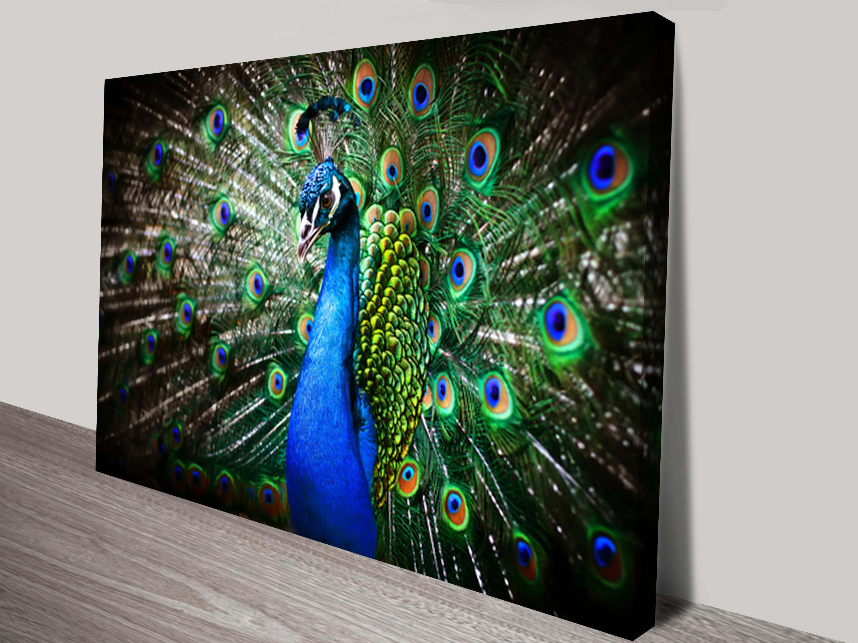 amazing peacock framed wall art canvas giclee artwork carlton
