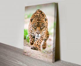 Hunting_Jaguar-sm