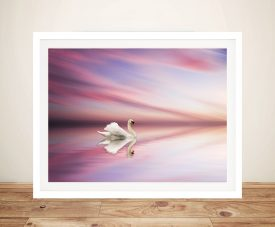 Swan at Sunset Photo Art Picture Print on Canvas Australia