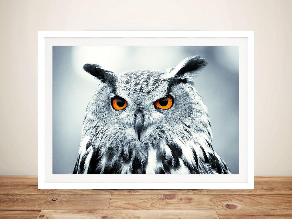 Under Observation Snowy Owl Canvas Wall Art Print Australia