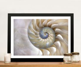 Nautilus Shell Abstract Art Print on Canvas