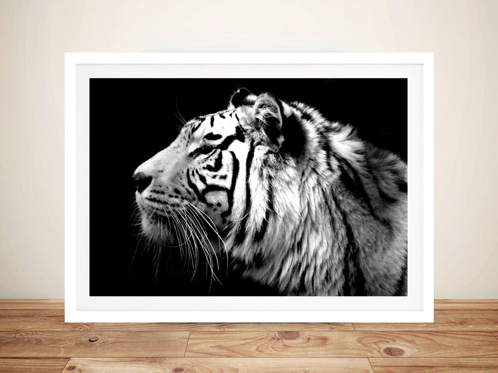 Tiger Black Amp White Canvas Art Prints