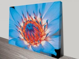 Blue Close Up Floral Art on Canvas