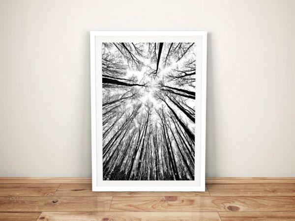 Forest skylight Black and White Framed Wall Art