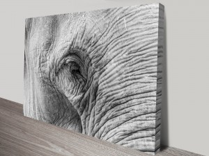 Gentle Eyes Stretched Canvas Print