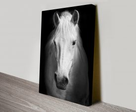 White Horse Black and White Photography Canvas Art Print