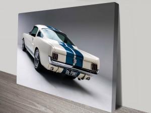 White Mustang Canvas Prints Australia