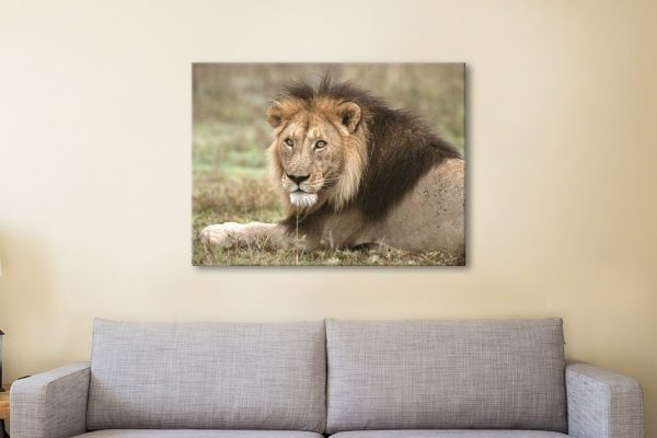 Ready to Hang African Lion Wall Art Online
