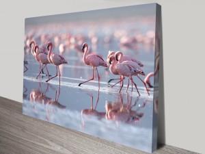 Flamingos-2-s
