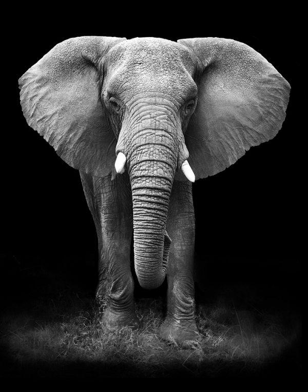 Elephant Photo Framed Wall Art