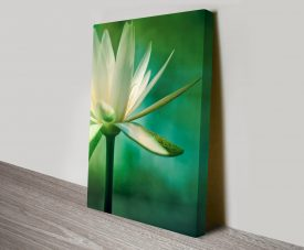 Lotus Flower Artwork on Canvas Prints Australia
