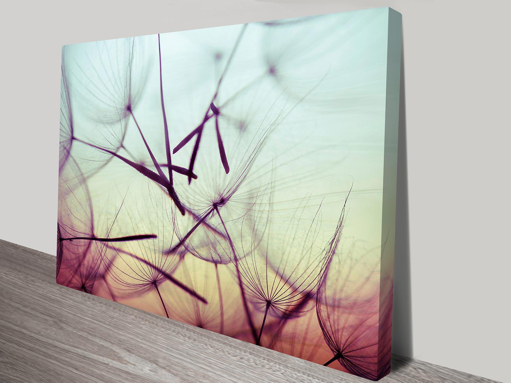 Dandelion seeds floral art on canvas print australia
