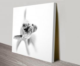 grumpy goldfish canvas wall art print
